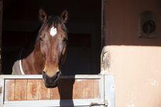 Free Brown Horse Royalty Free Stock Photos - 28948578