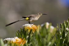 Free Bird Perched On Flower Royalty Free Stock Images - 28953309