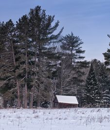 Free Cottage Amongst The Pines Royalty Free Stock Photo - 28954765