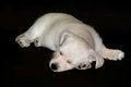 Free Sleeping Puppy Stock Photo - 28967850