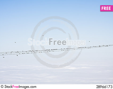 Free Birds On Power Lines Stock Photos - 28966173