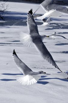 Free Flying Birds Stock Photography - 28962242