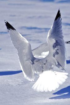 Free Flying Birds Stock Photos - 28962503