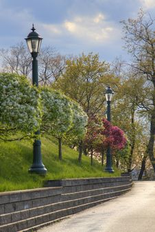 Free Suburban Sidewalk Lined With Trees And Lights Royalty Free Stock Photography - 28964757