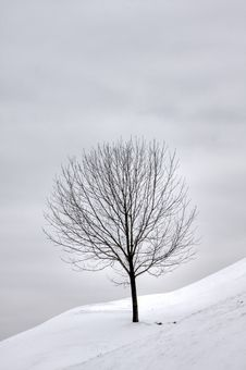 Free Lone Tree On Snowy Hill Royalty Free Stock Photos - 28964758