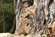 Free Deer Stock Photos - 28966473