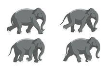 Free Elephant Run Stock Images - 28967564