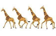 Free GIRAFFE RUN Stock Images - 28967574