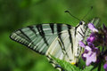 Free Butterfly On Flower Royalty Free Stock Images - 28970399