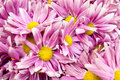 Free Pink Flowers Closeup Royalty Free Stock Photos - 28973648