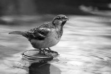 Free Sparrow Stock Photos - 28984273