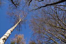 Free Treetops Stock Photos - 28986093