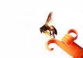 Free Honeybee Royalty Free Stock Photo - 28995835