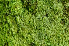 Free Moss & Lichen Stock Photo - 28990770