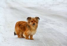 Free Lonely Little Dog On A Snowy Road Stock Images - 28991104