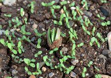 Free Sprouting Stock Photos - 28996763