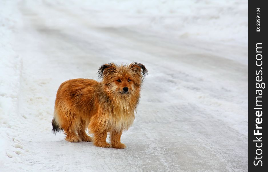 Lonely Little Dog on a Snowy Road