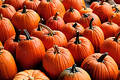 Free Pumpkins Royalty Free Stock Photography - 290307