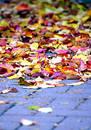 Free Autumn Leaves Stock Photos - 292583