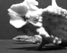 Close-up Of A Marmot Skull And Alligator Lizard Royalty Free Stock Image