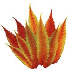 Free Fall Flaming Foliage Royalty Free Stock Photography - 291737