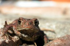 Free Toad Stock Photography - 292212