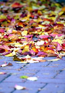 Free Autumn Leaves Stock Photos - 292583