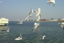 Seagulls In The Air Royalty Free Stock Photos