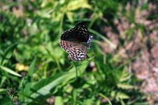 Free Butterfly Royalty Free Stock Image - 295466