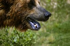 Free Bear Face Stock Images - 296774