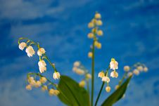 Free Lily Of The Valley Stock Photos - 297503