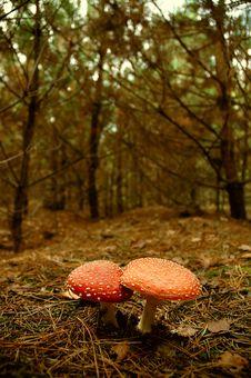 Free Mushroom Stock Photo - 297770