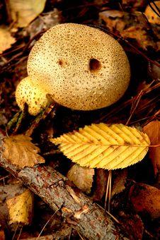 Free Mushroom Stock Image - 297771