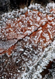 Free Frozen Leaf (macro) Royalty Free Stock Photos - 298338
