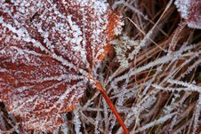Free Frozen Leaf Stock Photo - 298340