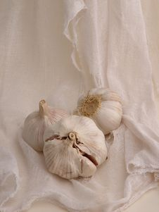 Free Garlic On Gauze (1) Stock Photography - 298592