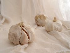 Free Garlic On Gauze (2) Stock Photos - 298593