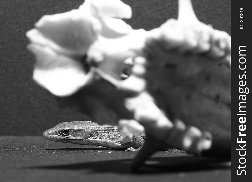 Close-up of a Marmot skull and alligator lizard