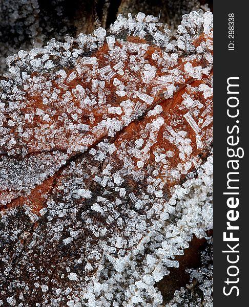 Frozen leaf (macro)