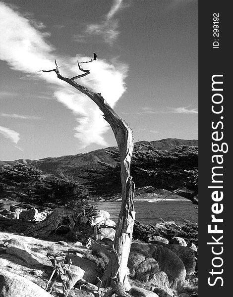 Lonely dead tree