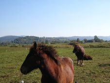 Two Horses In The Field Stock Image