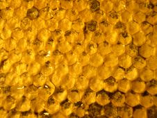 Free Honeycombs 3 Stock Images - 2901064