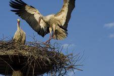 Free Stork - Stock Photos - 2902023