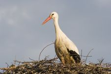 Free Stork - Royalty Free Stock Photography - 2902067