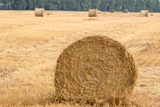 Field With Rolls Stock Photos