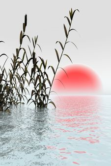 Free Water Grass Stock Images - 2905484