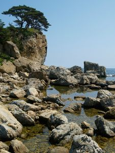 Free Rocky Coast With Pines Royalty Free Stock Photography - 2907517