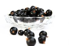 Free Currants Isolated In White Stock Photos - 2908733