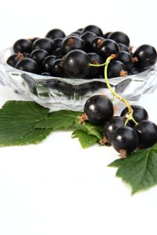 Free Currants Isolated In White Royalty Free Stock Image - 2908766