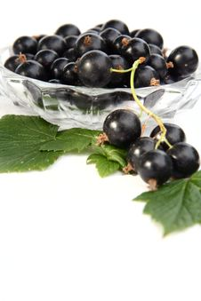 Free Currants Isolated In White Royalty Free Stock Photography - 2908777
